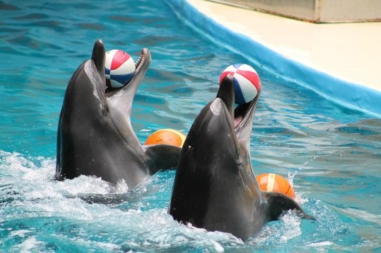 Istanbul Dolphinarium 4 activities to do in Istanbul